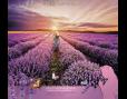 ปฏิทินตั้งโต๊ะ ปี 2561 CT.6108 Flower Blooming Season July