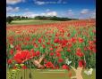 ปฏิทินตั้งโต๊ะ ปี 2561 CT.6108 Flower Blooming Season June