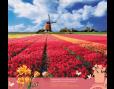ปฏิทินตั้งโต๊ะ ปี 2561 CT.6108 Flower Blooming Season May